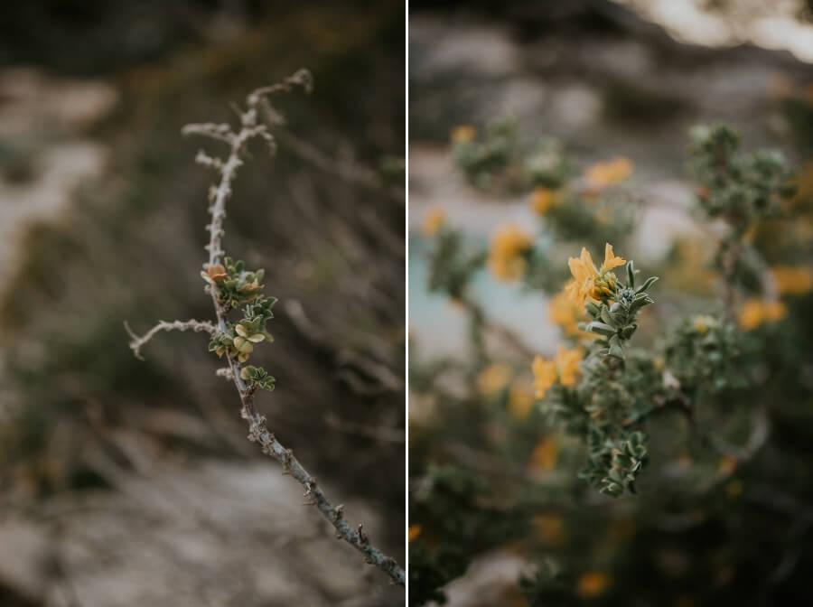 vegetation luxuriante dans les calanques de Sormiou